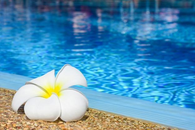 Flor de plumeria à beira de uma piscina azul ao ar livre.