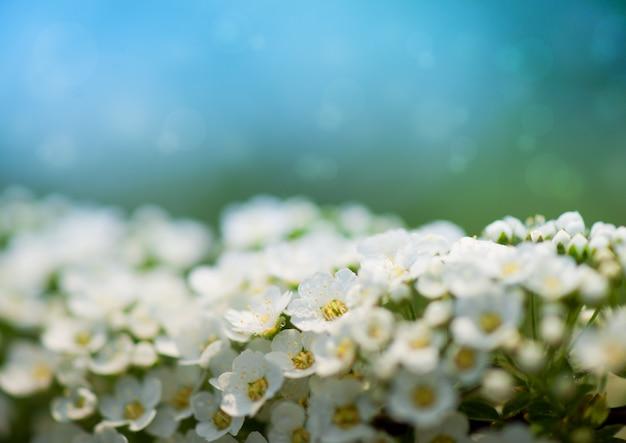 Flor de primavera - borda floral abstrata de folhas verdes e flores brancas