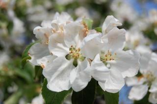 Flor de primavera, verão