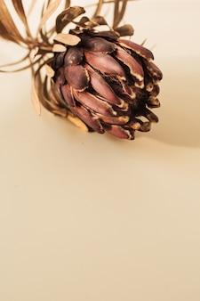 Flor de prótea em bege. composição floral exótica tropical minimalista elegante ainda vida.