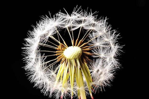 Flor de sopro
