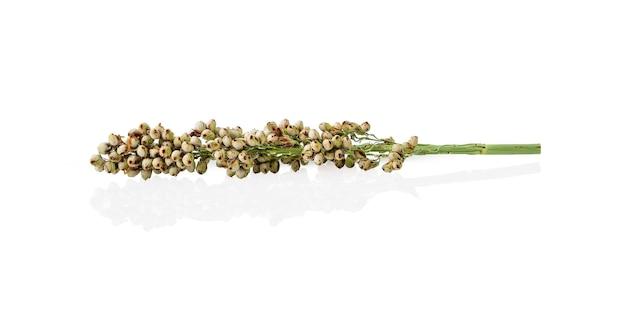 Flor de sorgo sobre mesa branca