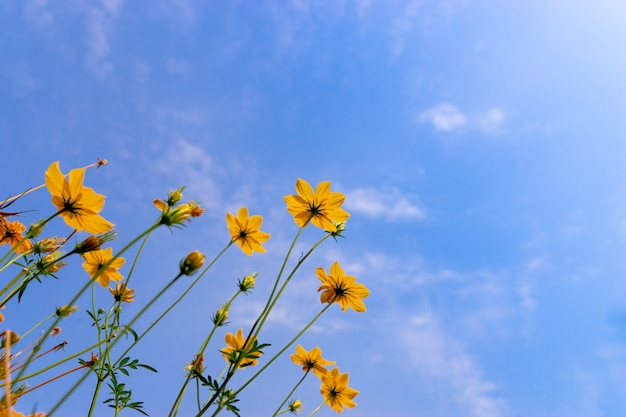 Flor de starburst de vista de formiga no céu azul