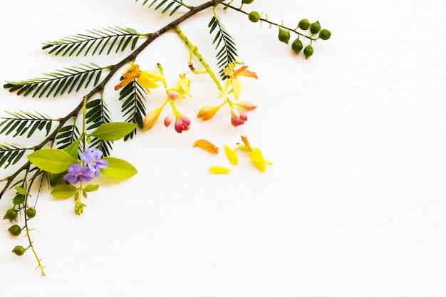 Flor de tamarindo com arranjo de folhas estilo cartão postal plano