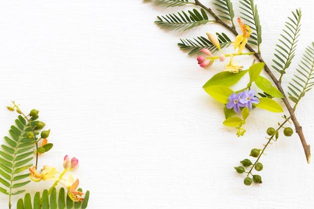 Flor de tamarindo e arranjo de folhas em estilo cartão postal plano