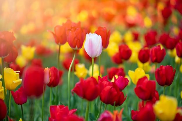 Flor de tulipa no jardim