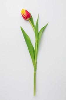 Flor de tulipas com vista superior