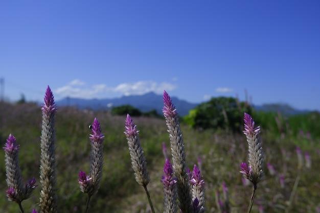 Flor de vidro na natureza contra o céu azul
