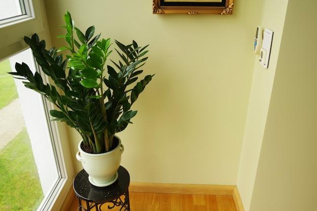 Flor de zamioculcas zamiifolia em vaso