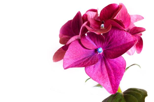 Flor decorativa hortênsia cor bordô