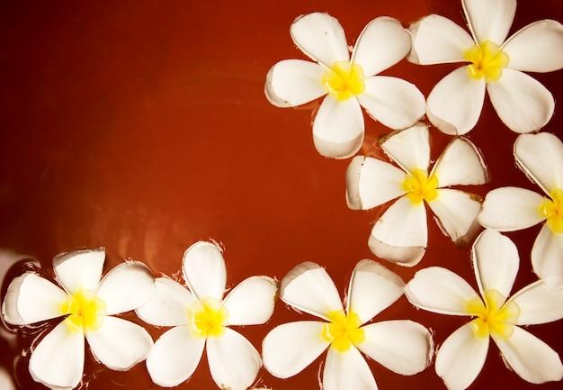 Flor do plumeria na água em um frasco da argila vermelha.