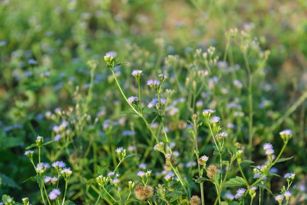 Flor do prado lindo e colorido da primavera.