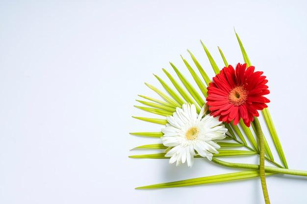 Flor e folha verde no branco