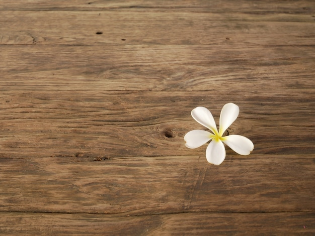 Flor e madeira