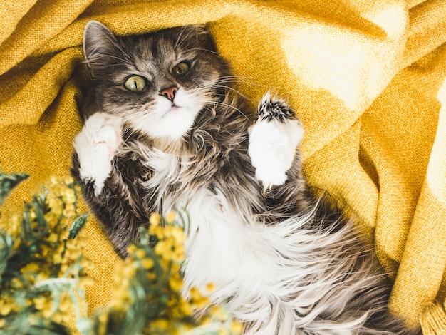 Flor e um gatinho fofo