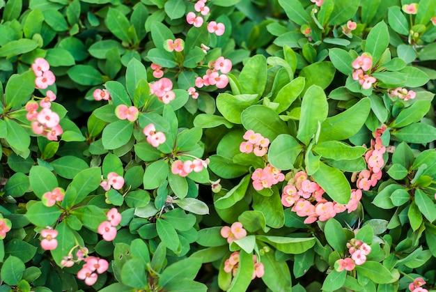 Flor em close-up no jardim