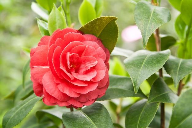 Flor em fundo natural