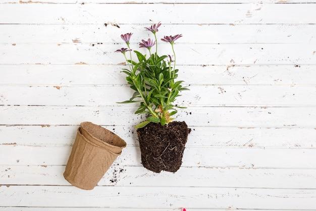 Flor em pote na mesa de madeira branca, conceito de jardinagem.