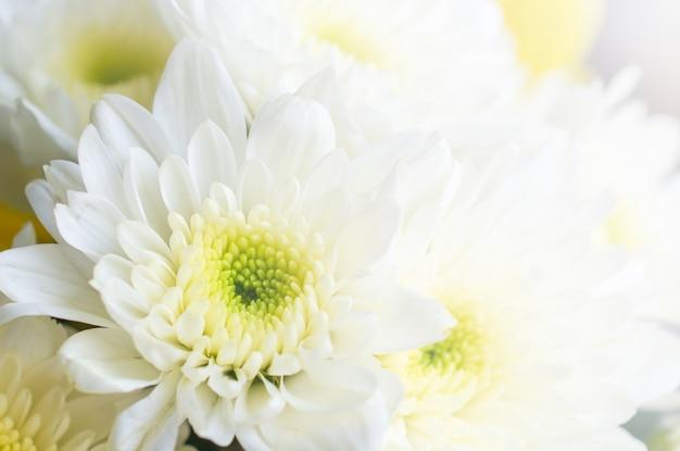 Flor embaçada para o fundo.