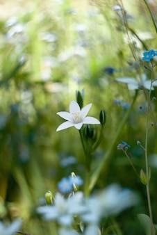 Flor estrela branca no jardim com fundo bokeh artístico.