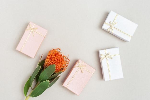 Flor exótica leucospermum com pétalas de cores brilhantes e caixas de presente. holoday fundo com espaço de cópia. cartão ou convite para aniversário, festa. postura plana. vista do topo.