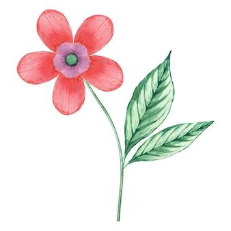 Flor florescendo aquarela