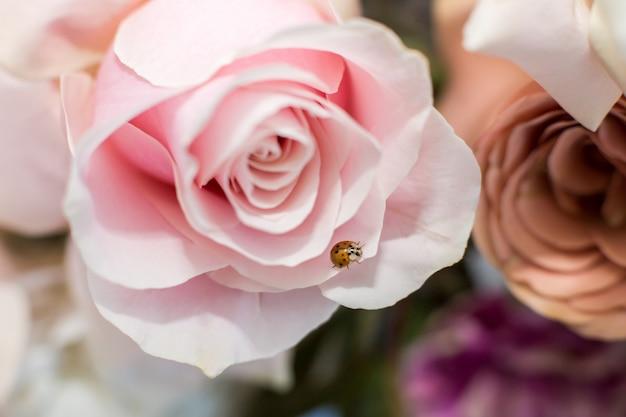 Flor fresca delicada macro da rosa do rosa. decoração de flores frescas de casamento.