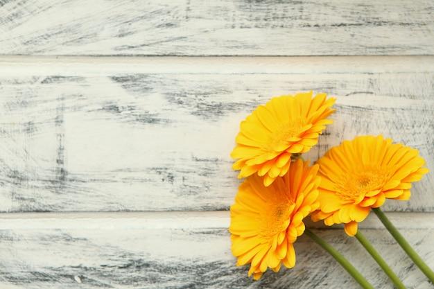 Flor gerbera amarela sobre fundo de madeira pintado de branco. copie o espaço para o texto. desenho de flores. lindo fundo botânico.