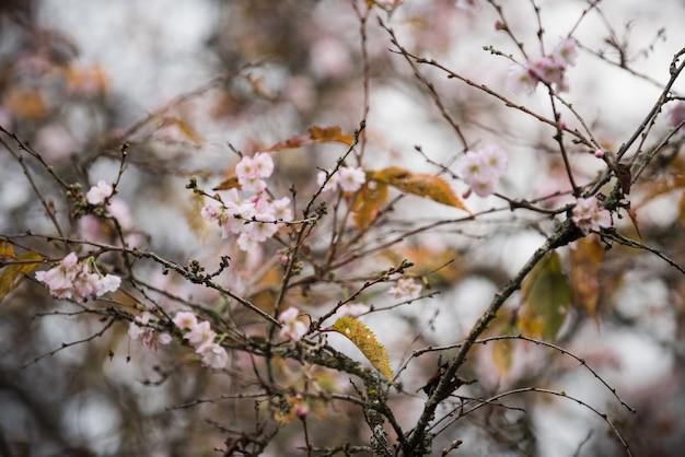 Flor higan no parque durante a temporada de outono