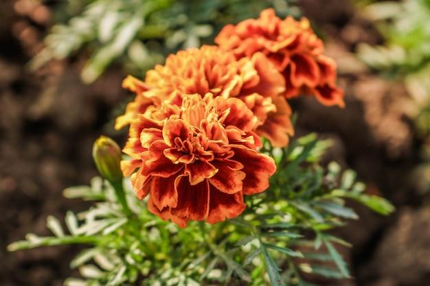 Flor laranja