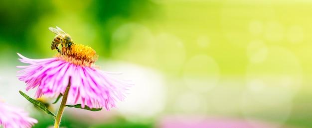 Flor lilás com uma abelha coletando pólen ou néctar.