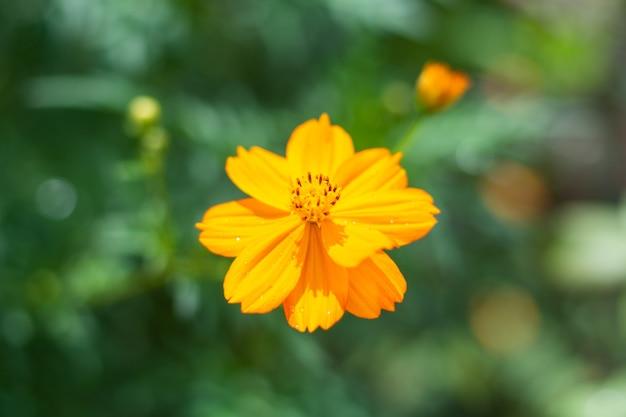 Flor linda amarela e folha verde