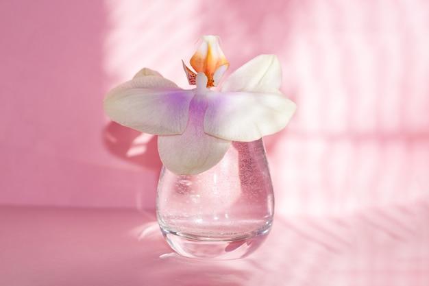 Flor linda orquídea em vidro em fundo rosa com sombras.