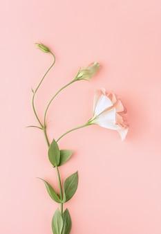 Flor linda rosa eustoma, lisianthus com folhas verdes. fundo floral rosa. recorte vertical. postura plana.