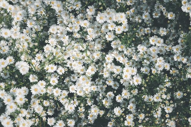 Flor margarida fundo de flores