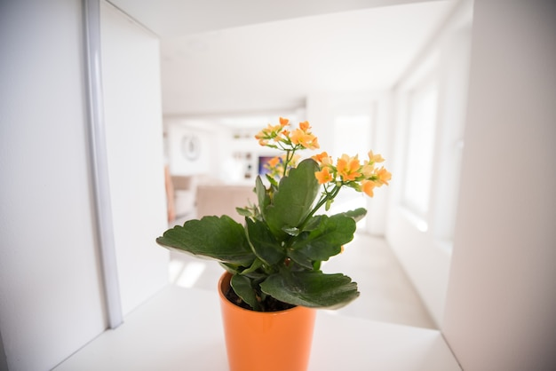 Flor na prateleira
