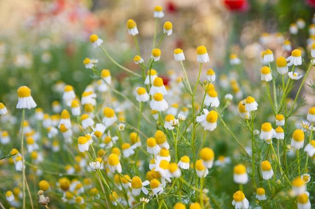 Flor no fundo do jardim