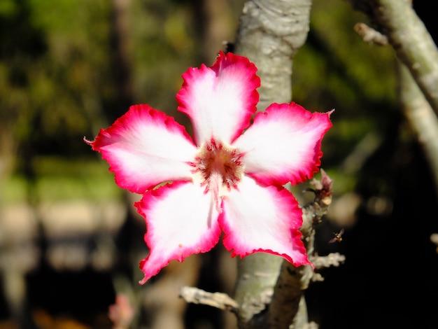 Flor no jardim do hotel, cataratas vitória, zâmbia