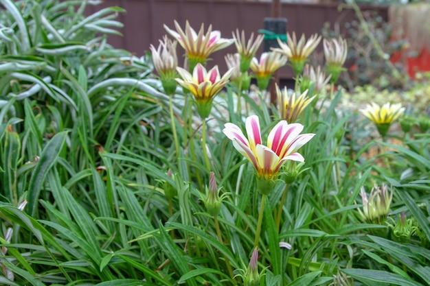 Flor no jardim em cingapura