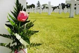 Flor no túmulo