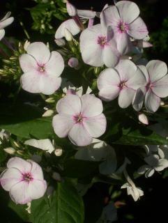 Flor, o verão