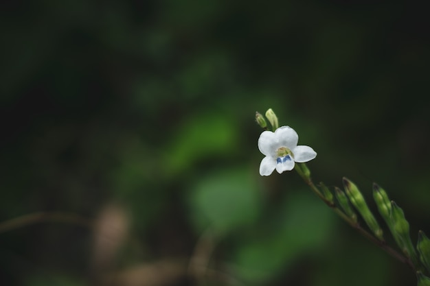 Flor pequena floresta branca na floresta tropical