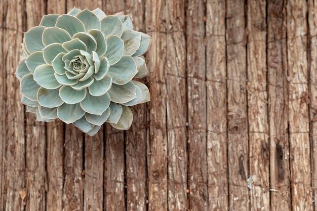 Flor plana leiga em fundo de madeira