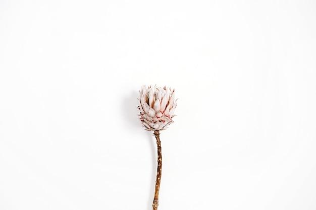 Flor protea de beleza em fundo branco.
