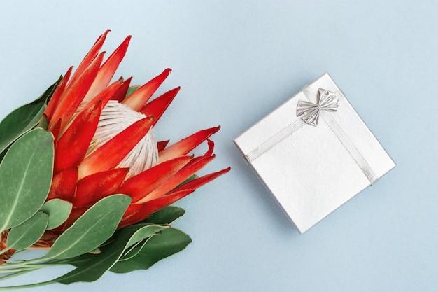 Flor protea, planta bonita grande e caixa de presente de prata