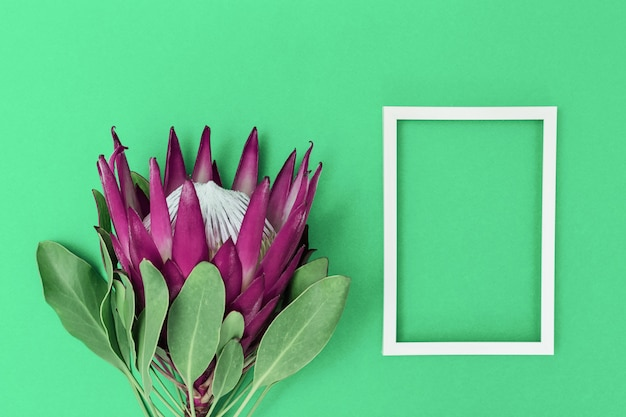 Flor protea, planta bonita grande e moldura branca na superfície do papel. fundo de composição mínima para cartão postal ou convite para aniversário, aniversário, casamento. vista do topo.