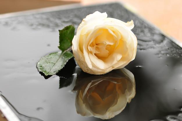 Flor rosa branca. Foto Premium