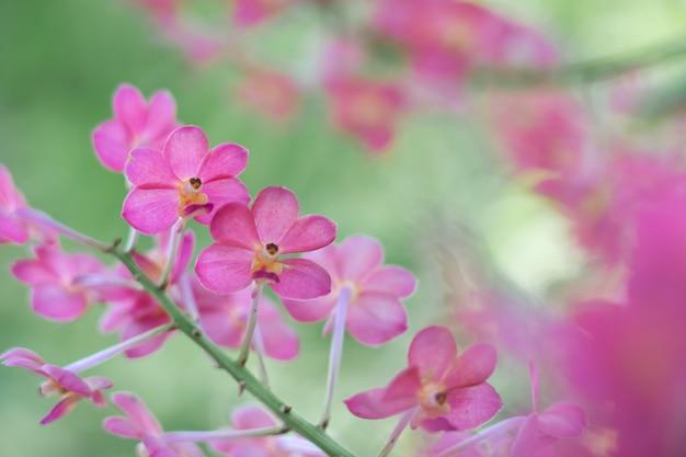 Flor rosa com espaço de cópia usando como pano de fundo