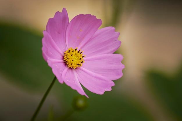 Flor rosa com fundo verde desfocado