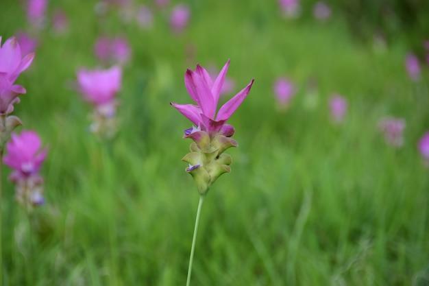 Flor rosa com fundo verde